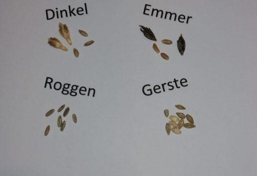 Ernährung: Welches Mehl wird wie verbacken?